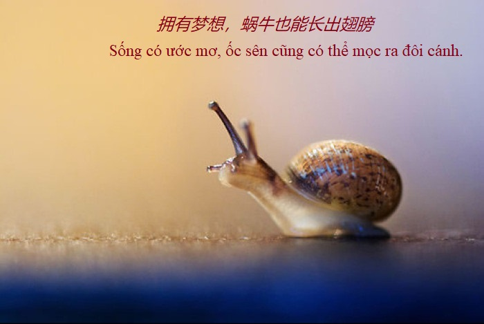 status hay về cuộc sống tiếng Trung